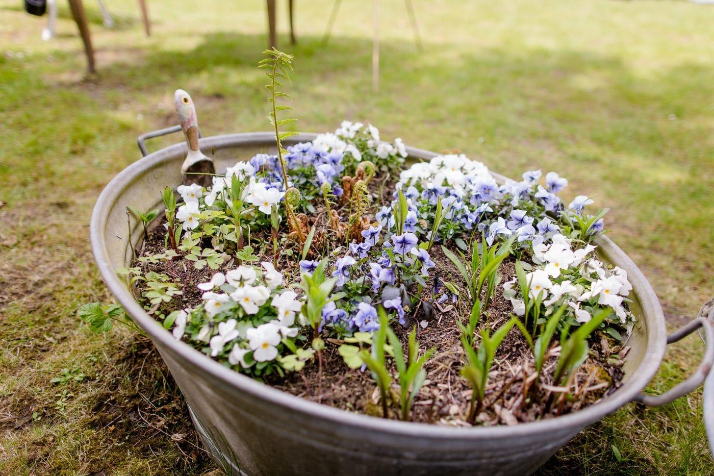 Blumendekoration im Garten der Residenz Jena